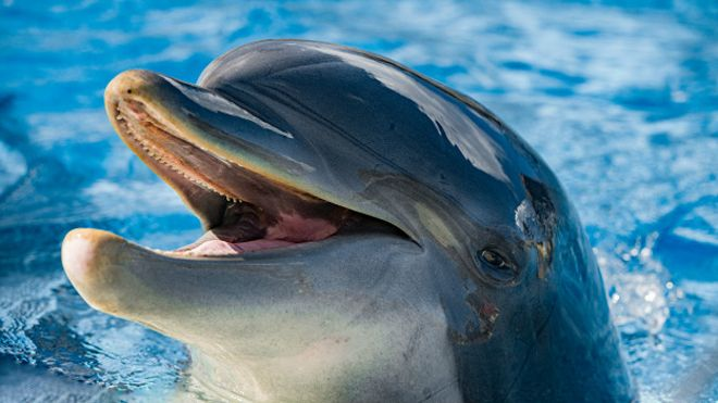 Необычное развлечение дельфинов