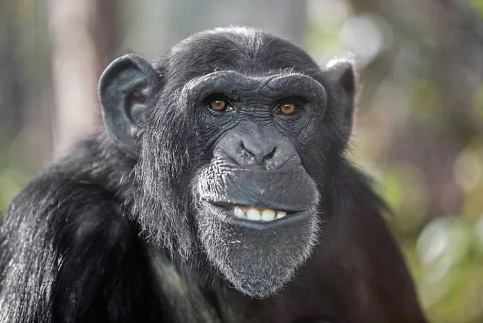 Не хочу быть... обезьяной! Прости, Дарвин