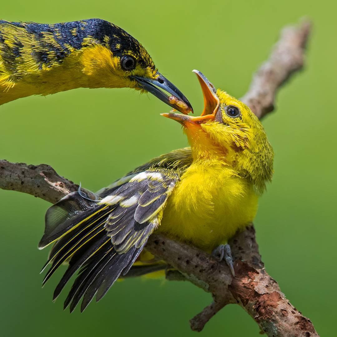 Великолепные фотографии птиц
