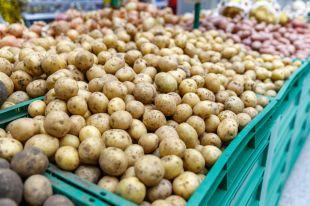 Пойдём искать картошку! Как выбрать клубни, которые вас ничем не заразят