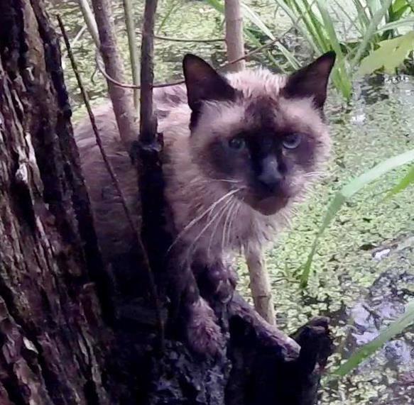 В Луизиане спасли кота, застрявшего на дереве в болоте