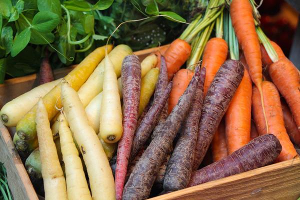 Разноцветные чудеса: необычные сорта моркови и свеклы