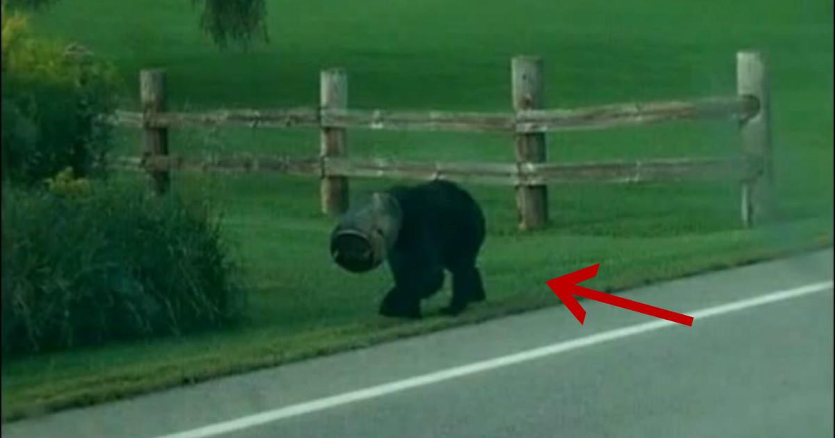 Мужчина увидел странное существо с тяжёлой головой… И понял, что тут надо не бояться, а бежать навстречу!