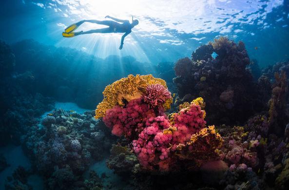 Таиланд спасет коралловые рифы с помощью суперклея
