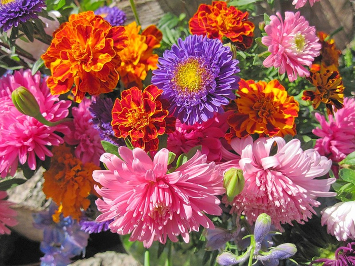 цветы осени 2 (700x525, 531Kb)
