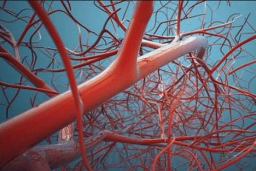 Как укрепить кровеносные сосуды и капилляры народными средствами. Какие продукты питания помогут