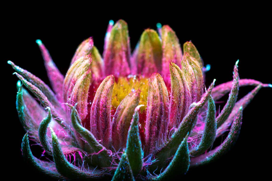 Фотографии цветов Крэйга Барроуса (Craig Burrows)