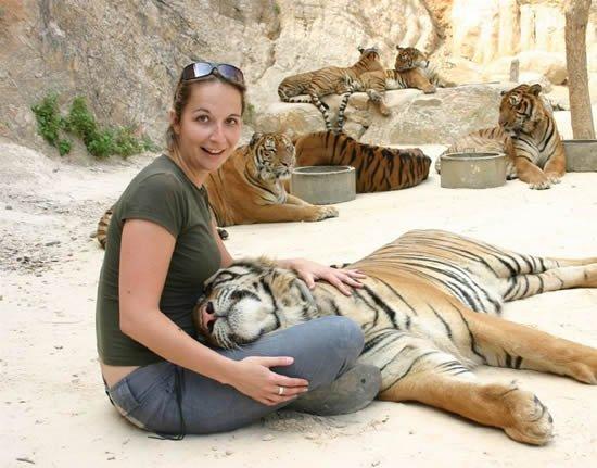 Ручные тигры — в буддистском…