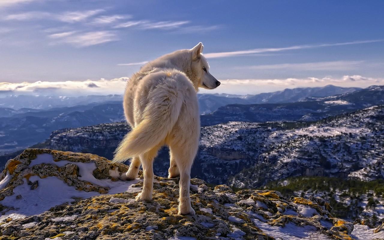 Потрясающие фото и картинки волков