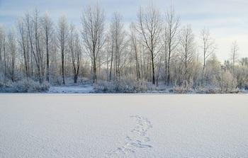 На Волге найдены тела вмерзших в лед мужчины и женщины
