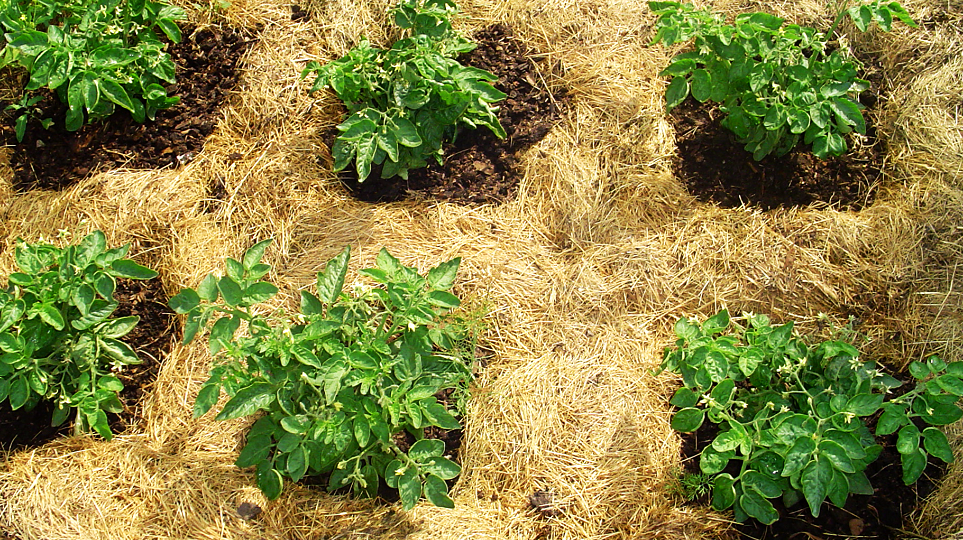 Чем прикрыть почву, чтобы не росли сорняки
