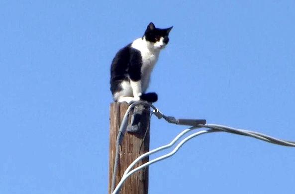 Кошка просидела три дня на столбе, пока о ней не написали в Фэйсбуке