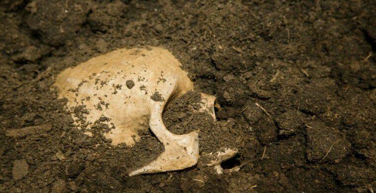 На Нормандских островах обнаружен загадочный скелет без рук