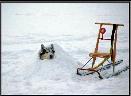 Сколько снегу понасыпало...