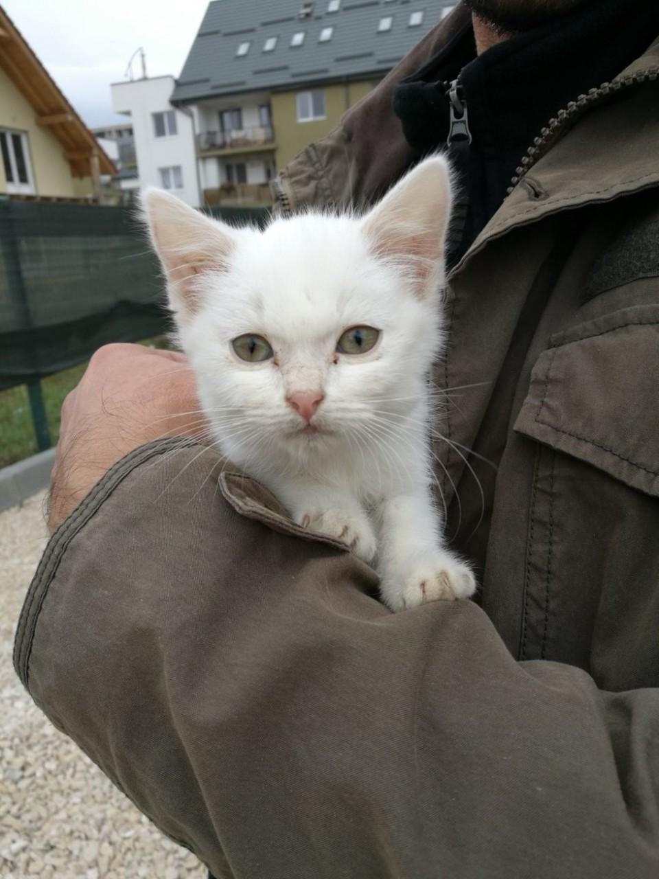Семья подыскивала друга-котё…