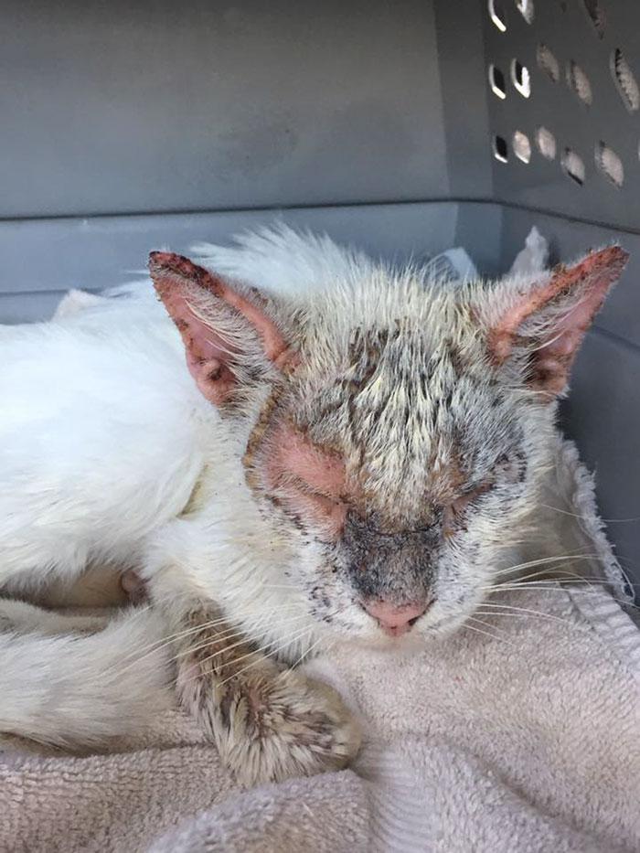 Врачи думали, что больной кот останется слепым навсегда. Но однажды он открыл глаза, поразив свою спасительницу