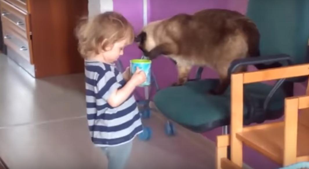 Трогательная дружба девочки и кота (видео)