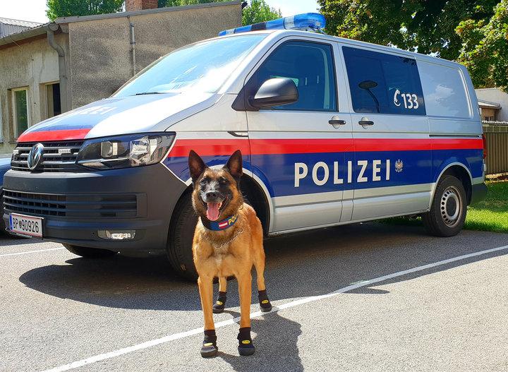 Фотофакт. Полицейским собака…