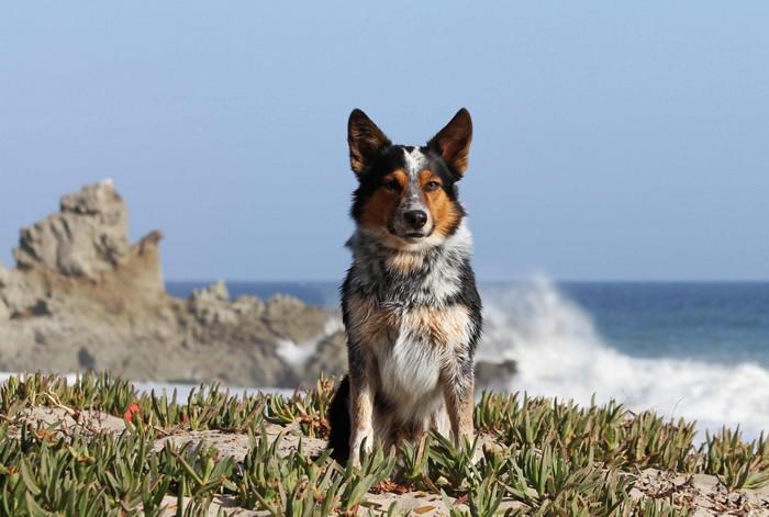 Этого пса не зря называют самым умным в мире . Вы только взrляните, ЧТО он вытворяет!