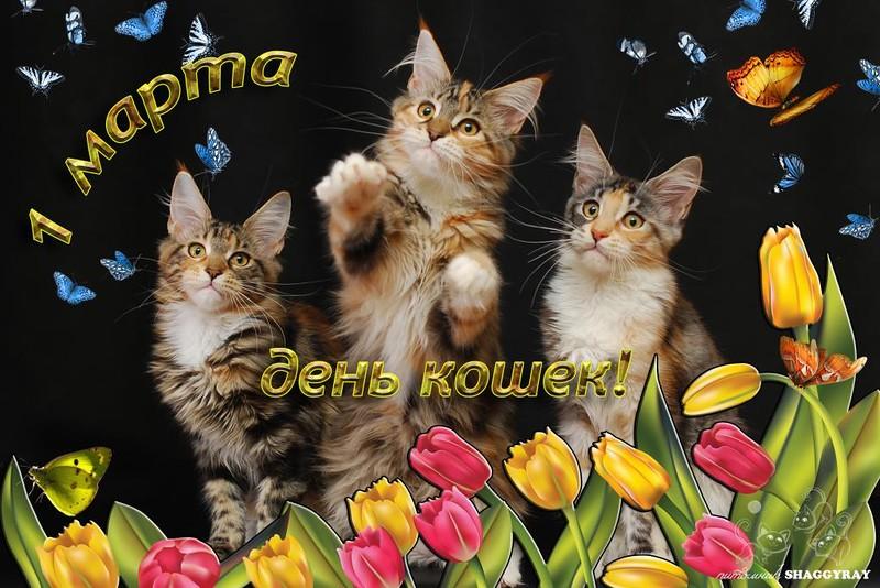 1 марта День кошек! (интересные факты, стихи и открытки)