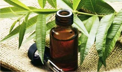 Природные средства против акне: масло чайного дерева