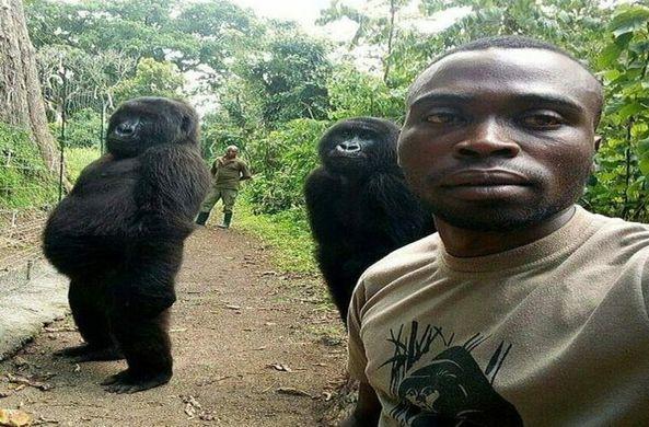 Рейнджер опубликовал необычные фотографии с гориллами