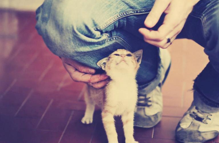 Коты продлевают жизнь мужчинам