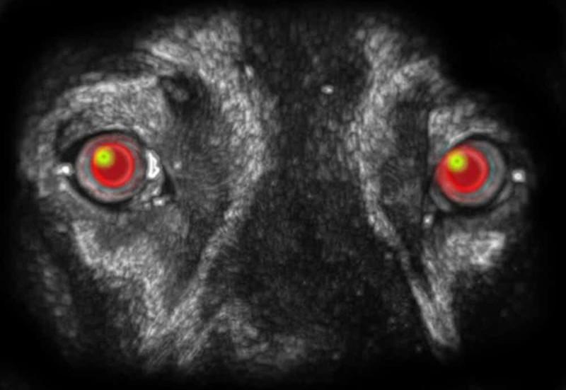 Чупакабра парализует животных взглядом Городская легенда, городские легенды, миф или правда, мифы, мифы истории, монстр, страшилки, чупакабра