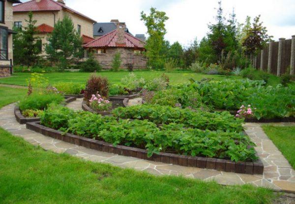 Урожай в огороде