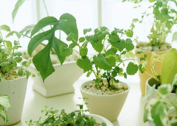 МИР РАСТЕНИЙ.Закон  выращивания комнатных растений (1)