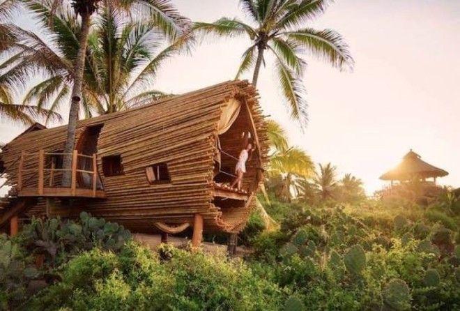 35 самых комфортабельных домов на деревьях, откуда не захочется спускаться