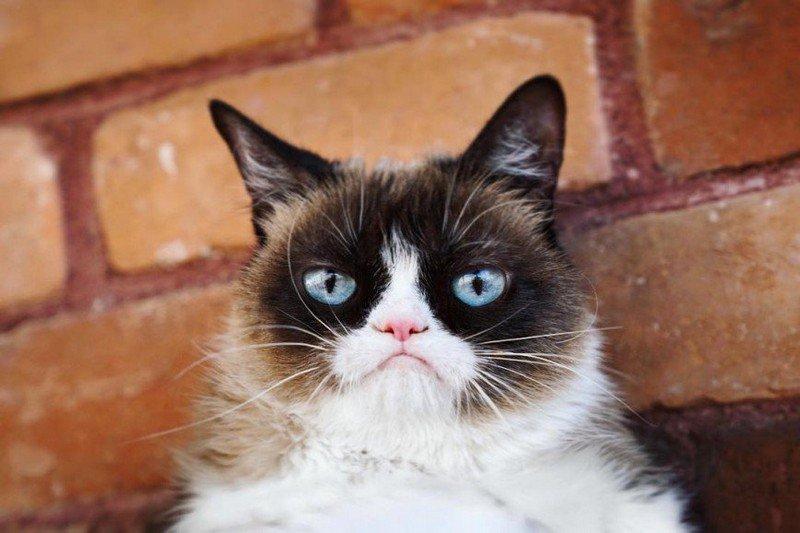 Самые знаменитые кошки