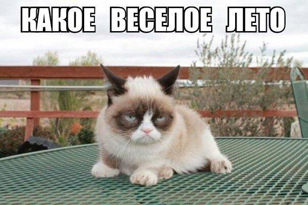 Ежик бормочет, слезая с кактуса:  - Так обознаться... так обознаться...