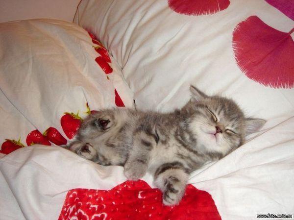Сладкий сон.