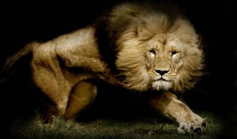 10 самых опасных существ на планете