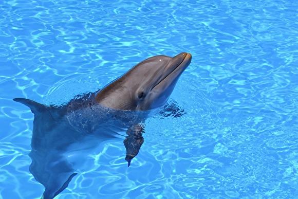 Минкульт хочет запретить насмехаться над дельфинами и подпускать к ним пьяных