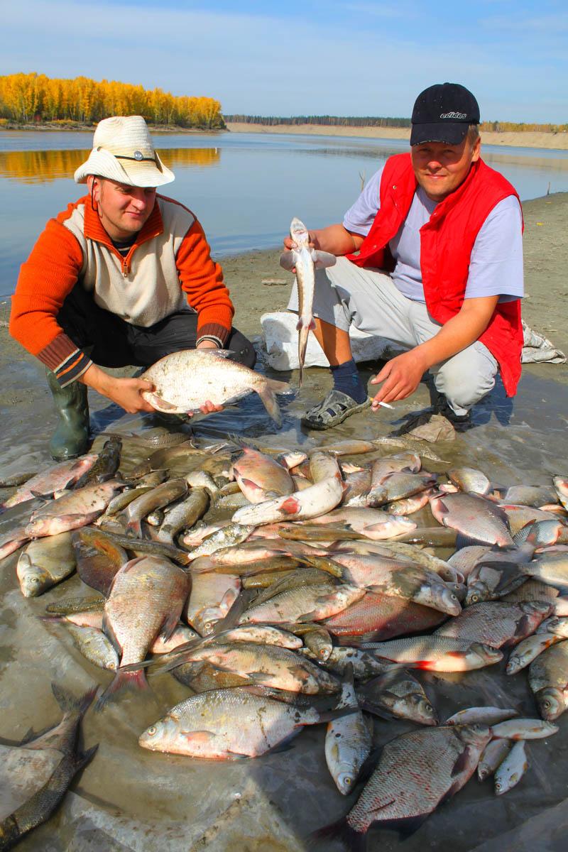 рыбалка в камне на оби сегодня