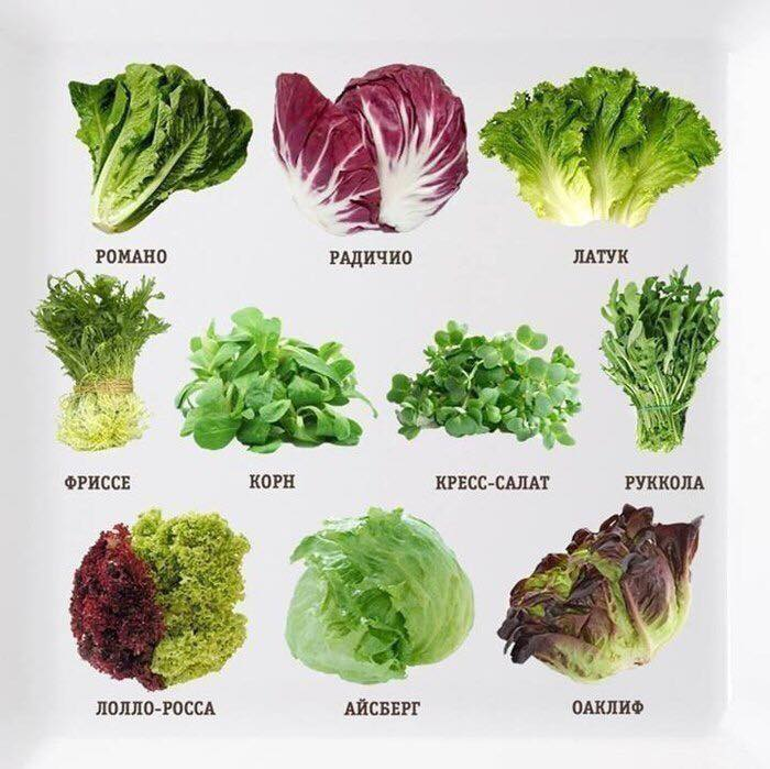 10 видов салата для вашего здоровья.