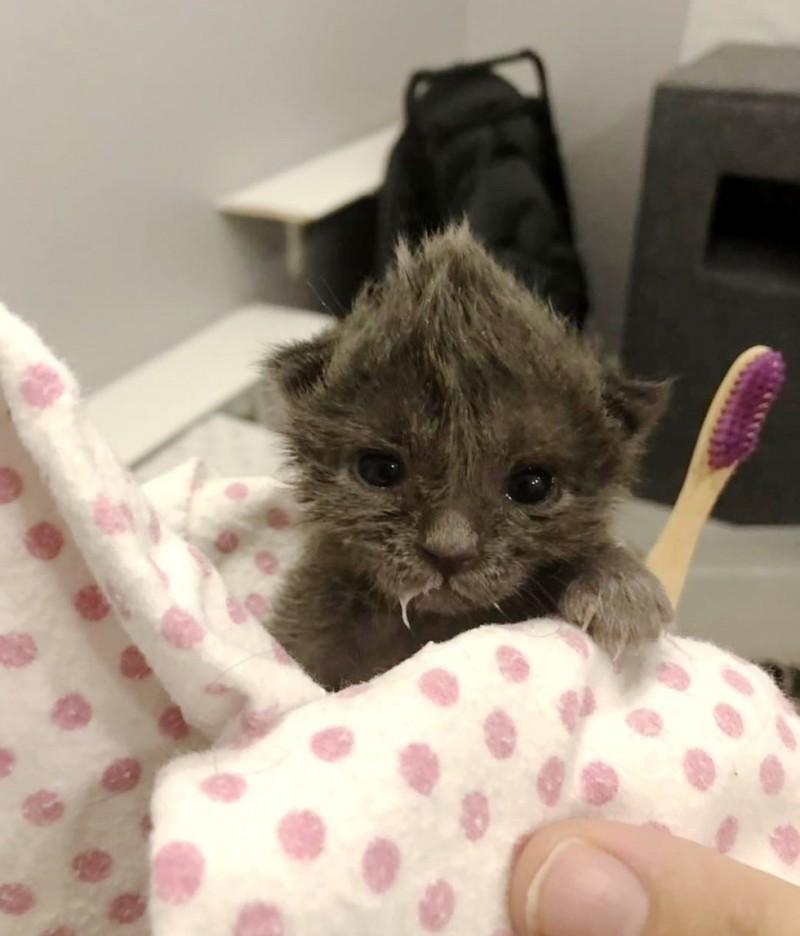 Котенок с милым хохолком на …