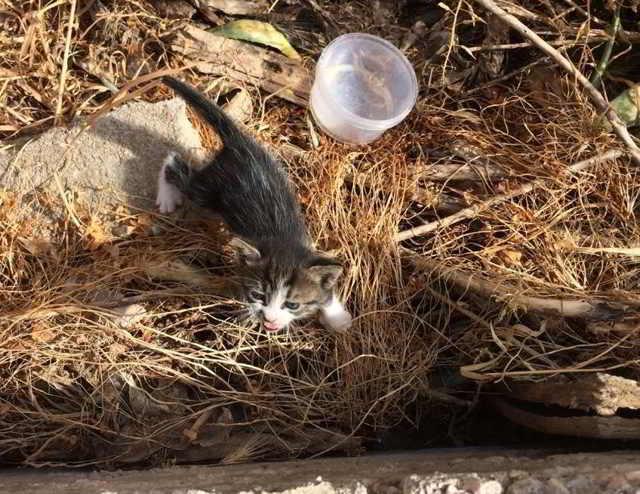 Маленький мокрый котенок плакал у реки… Спасти малыша не могли, он очень боялся людей.