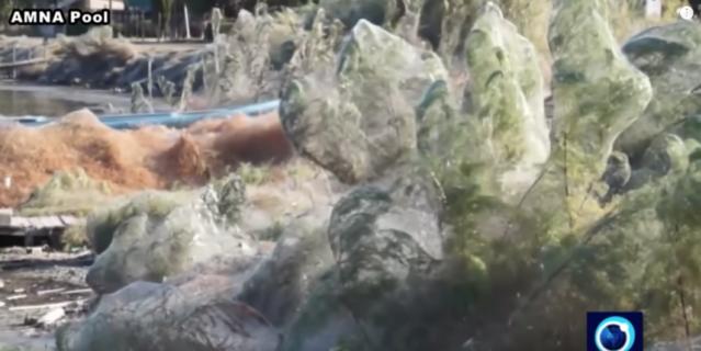Гигантская паутина покрыла побережье в Греции. Фото
