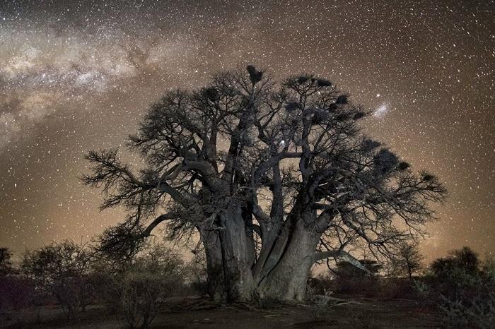 Уязвимые гиганты: Фотограф потратил 10 лет жизни на поиск самых старых деревьев на Земле