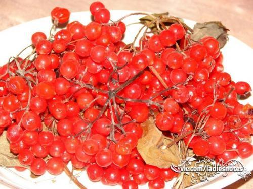 Калина красная.  Калина — не только удивительно красивое, но еще и полезное растение.