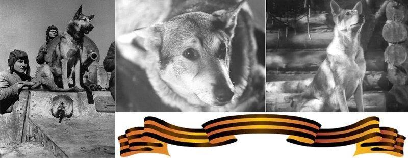 Джульбарс - пес, которого на…