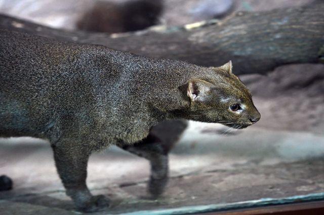 Вольеры Московского зоопарка оснастят камерами для наблюдения за животными