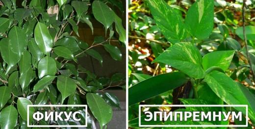 Эти 6 растений спасут вас от жары этим летом!
