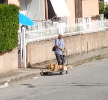 Человечность! Мужчина катает старую собаку на тележке, помогая ей просто жить…