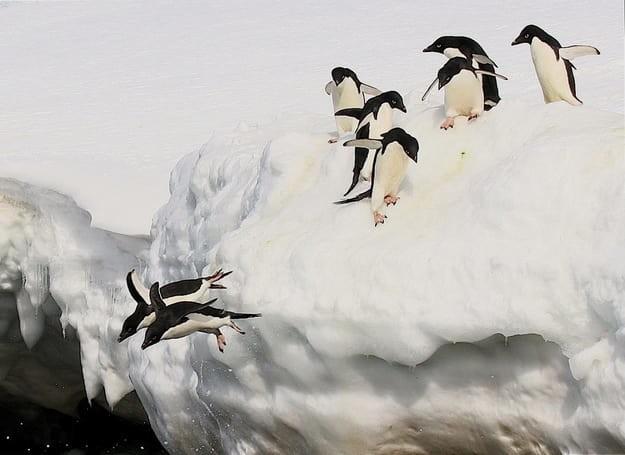 А еще вы увидите пингвинов Адели... антарктида, вопрос, ответ