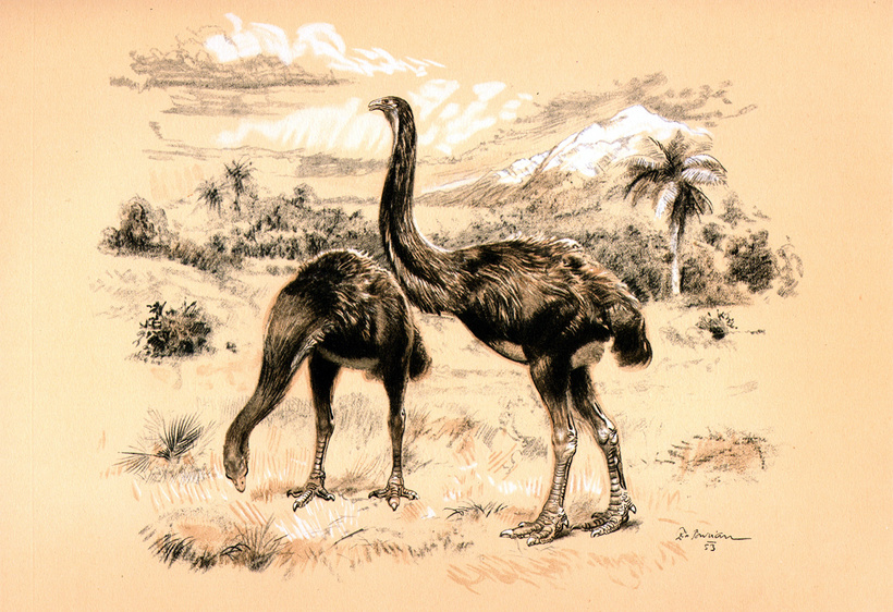 Всего 250 лет назад на Мадагаскаре обитали гигантские птицы-слоны