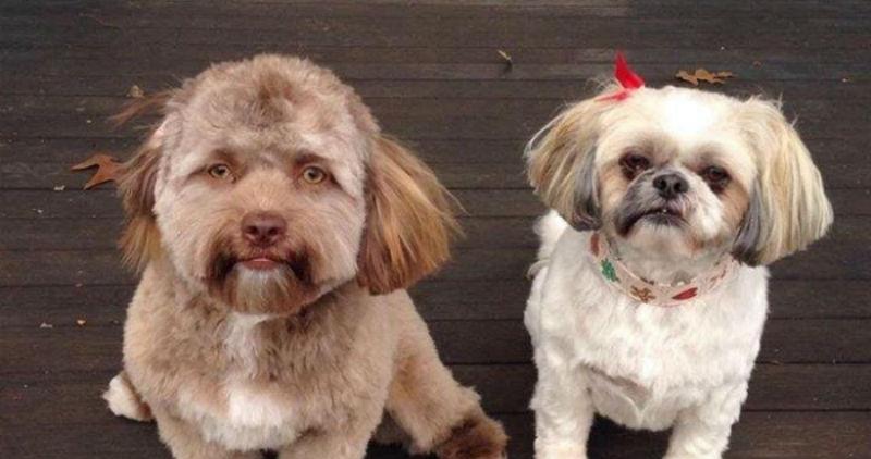 На Reddit обнаружили пса с человеческим лицом, который даже умеет хитро подмигивать